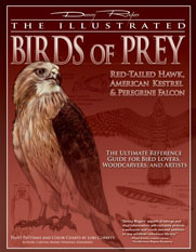 dr-birds-of-prey
