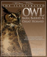 Illustrated_Owl_Barn_Barred_Great_Horned_3